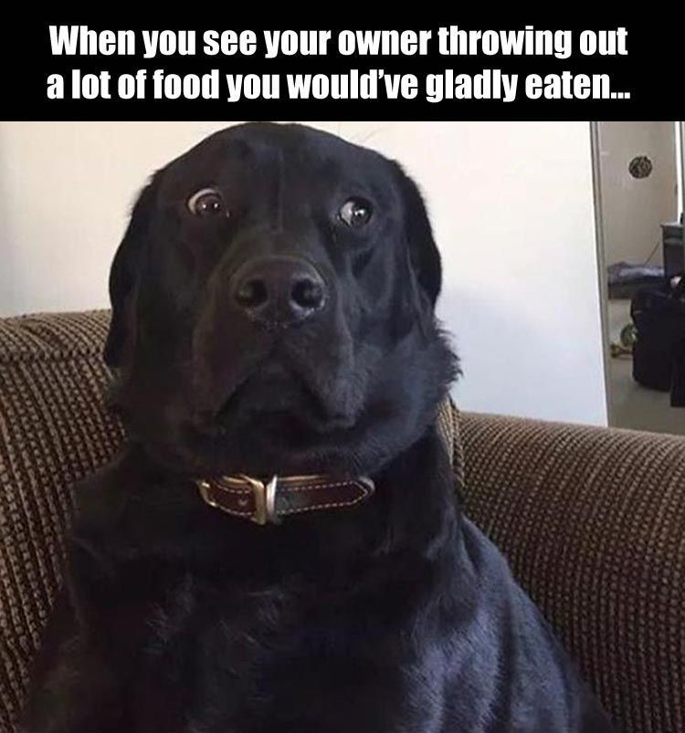 """Funny Pictures Of The Day – 40 Pics More #funnydogquotes explore Pinterest""""> #f..."""