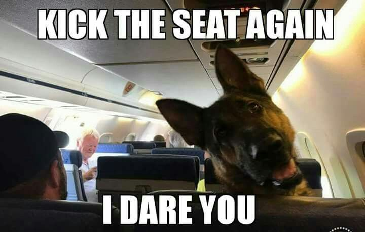 "The German Shepherd #funnydogpictures ""> #funnydogpictures"