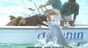 "funny animal memes, animal pictures with captions, funny animals #memes #humor ""> #memes #humor"