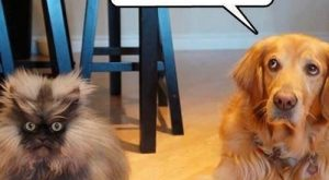 "Funny Dogs with Captions | Funny pictures w/ #memes #humor ""> #memes #humor"