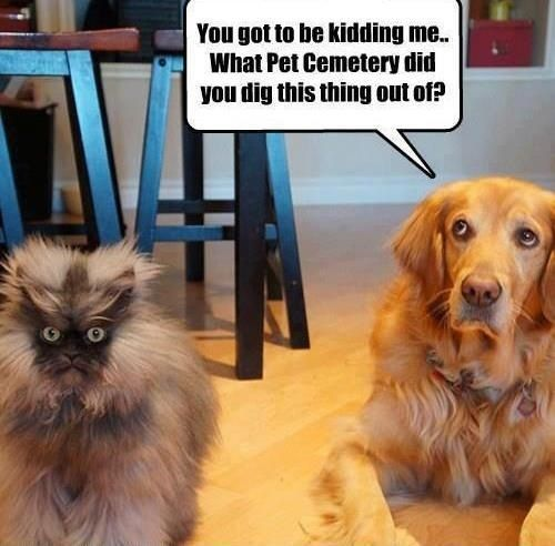 """Funny Dogs with Captions 