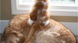 Best  Funny Dogs VS Cats Memes Images To Prove Whos Boss #funnydogs explore…