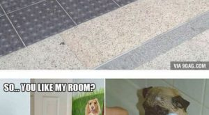 Friday Funny images (11:49:33 AM, Friday 30, September 2016 PDT) – 17 pics #funnydoghila...