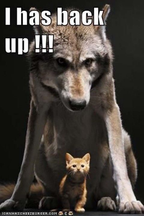 funny animals pictures with captions (54 pict) | Funny Pictures #funnydogquotes explore Pi...