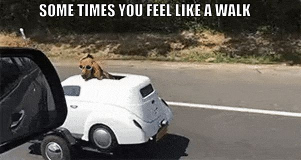 "+ HILARIOUS DOG PICS WITH CAPTIONS YOU HAVE TO SEE #funnydogpictures ""> #funnydogpictures"
