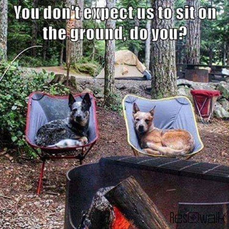 Funny Animal Pictures Of The Day – 12 Images #funnydogpictures explore Pinterest&#82...