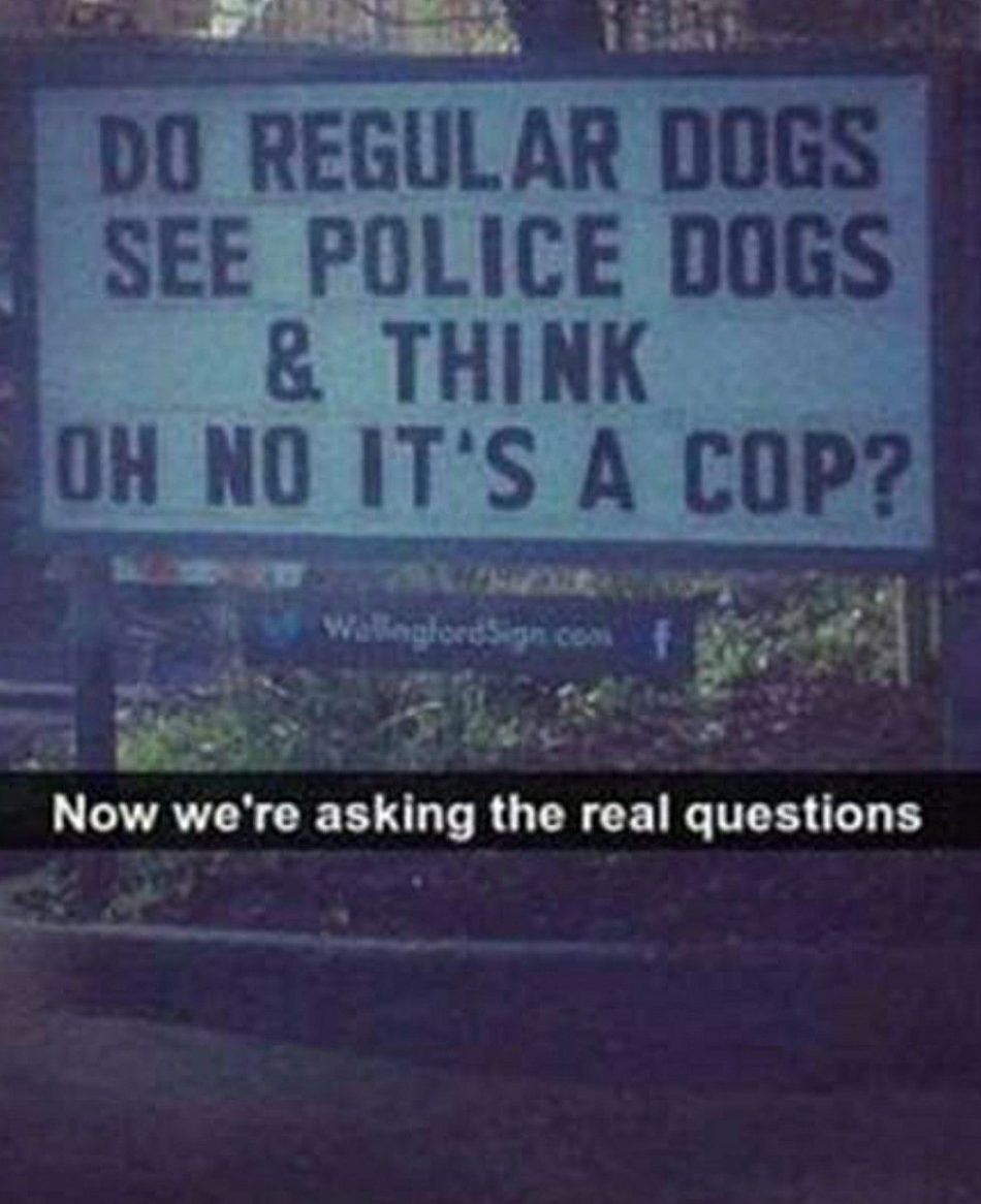"""I SAW A SIGN IT OPENED UP MY EYES #dogsfunnysigns """"> #dogsfunnysigns"""