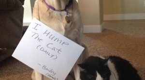 "Dog Shame : Photo #funnydogshaming ""> #funnydogshaming"