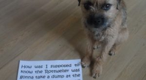 "Dog-shaming #funnydogshaming ""> #funnydogshaming"