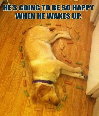 """50 Best Animal Pictures With Captions 4 #funnydogwithcaptions explore Pinterest"""">..."""