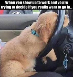 "when-you-show-up-to-work-funny-dog-on-steering-wheel #memes #humor ""> #memes #humor"