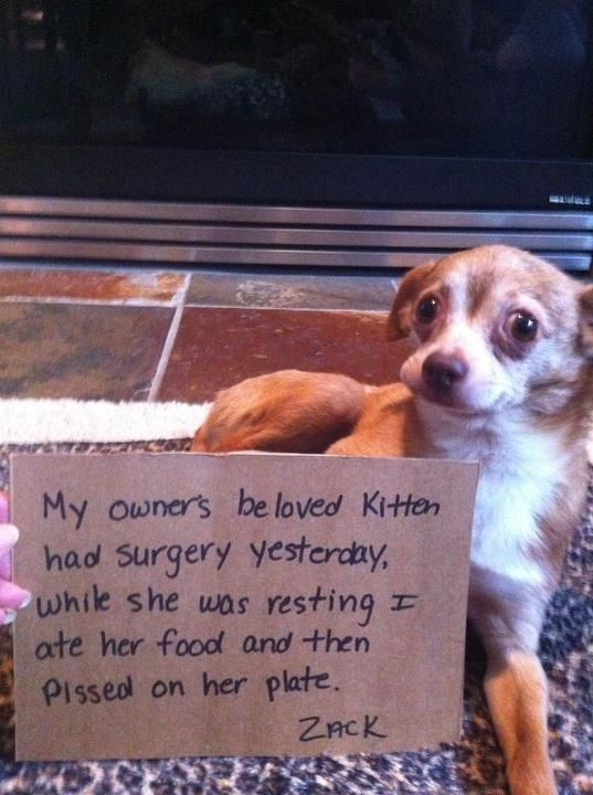 """""""My owner's beloved kitten had surgery yesterday, while she was resting I ate her…"""