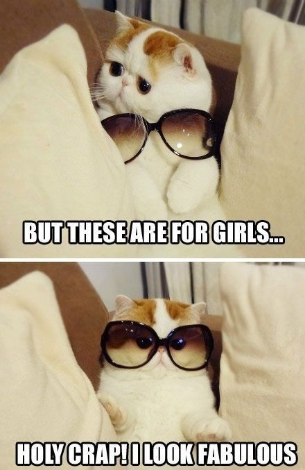 Funny cat wearing sun (Click on picture to see more stuff) More