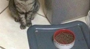 Funny Animal Pictures Of The Day – 15 Pics Please check out: It's wicked…