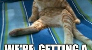 Top  Funniest Memes Of The Year ft. Funny Cats – Gap Ba Gap