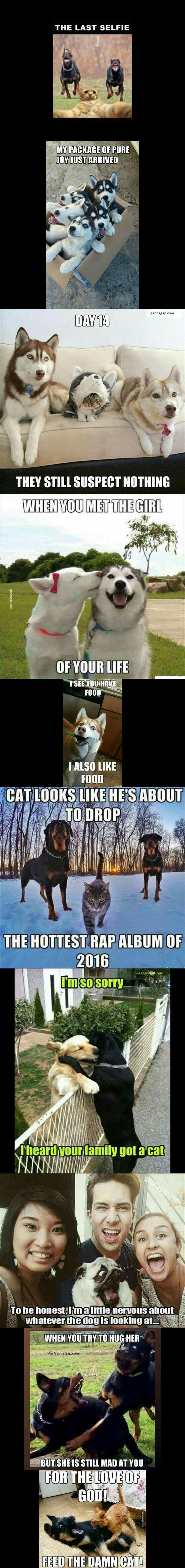 Top  Funniest Memes ft. Funny Dogs And Cats