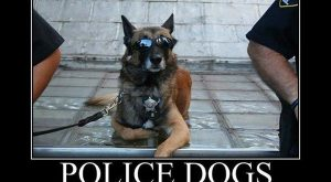 Police Dogs