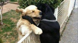 "Funny Animal  –  Images #AwesomePictures ""> #AwesomePictures #funnydogmeme…"