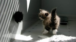 pictures of cute baby animals cute animal pictures with quotes cute animal pictures to…