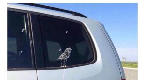 "From Scott Fuck u bird #humour "" #humour #lmao search Pinterest"" #lmao #fun…"