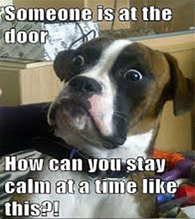 """So Funny Dog Pictures To Make You Laugh #funnydogs """" #funnydogs #DogHumor…"""