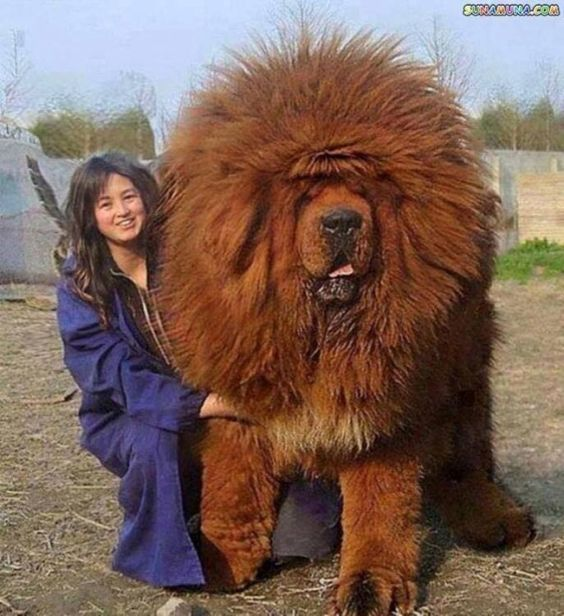 I wonder how a lion would feel if this walked up to One of…