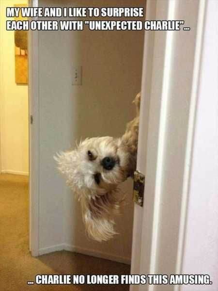 """Of The Best Funny Animal Pictures Ever #funnydogpictures """"> #funnydogpictures"""
