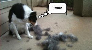 "Frank? lol #dog search Pinterest""> #dog #humor search Pinterest""> #humor"