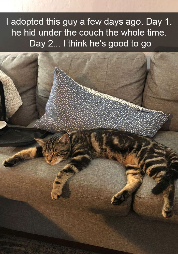 + Hilarious Cat Snapchats That Will Leave You With The Biggest Smile (New )