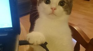 Calmly Threatening Cat memes – kitty cat humor funny joke gato chat captions feline…