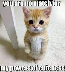 You are no match for my powers of cuteness! Share these funny cat pictures…