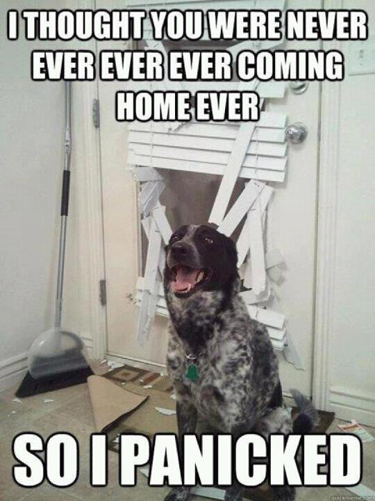 HAHAHA this is exactly Charlie! His separation anxiety is beyond never thought a little…