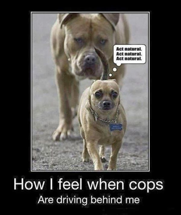 Funny dog pictures with  pictures like shotgun dog. Some funny dog pictures with…