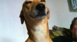 Of The Happiest Dog Memes That Will Keep You Laughing For Hours #memes…
