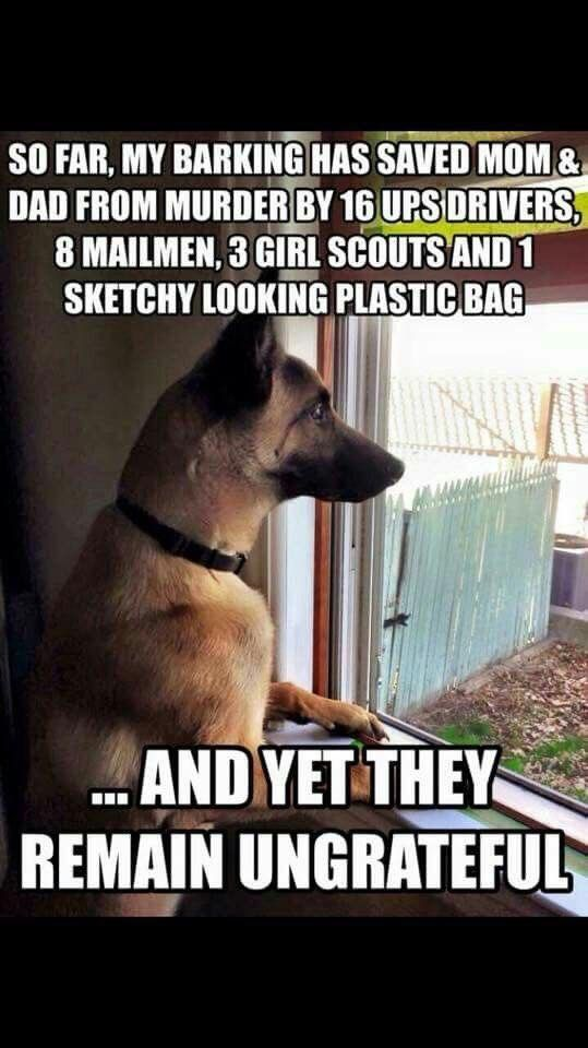 "The German Shepherd #funnydogquotes explore Pinterest""> #funnydogquotes"