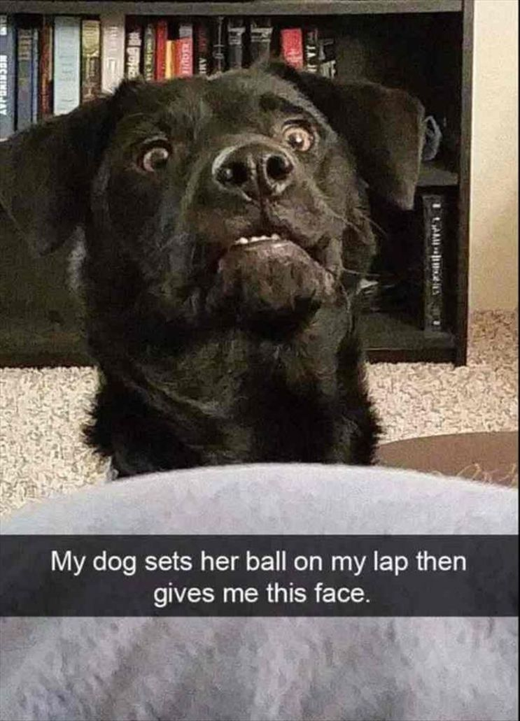 """Funny Animal Pictures #memes #humor """"> #memes #humor"""