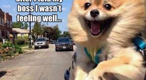 """Funny Pictures Of The Day – 33 Pics #funnydogwithcaptions explore Pinterest""""&g..."""