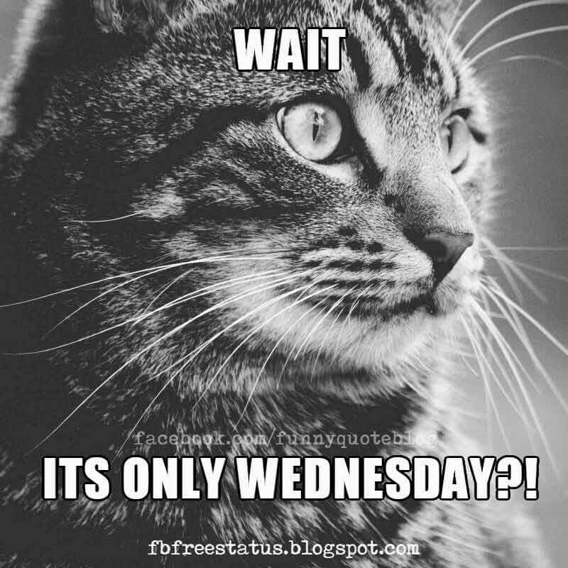 Wednesday Memes, Wait It's Only Wednesday