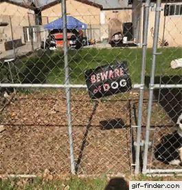 "Beware of Smiling Dog #memes #humor ""> #memes #humor"