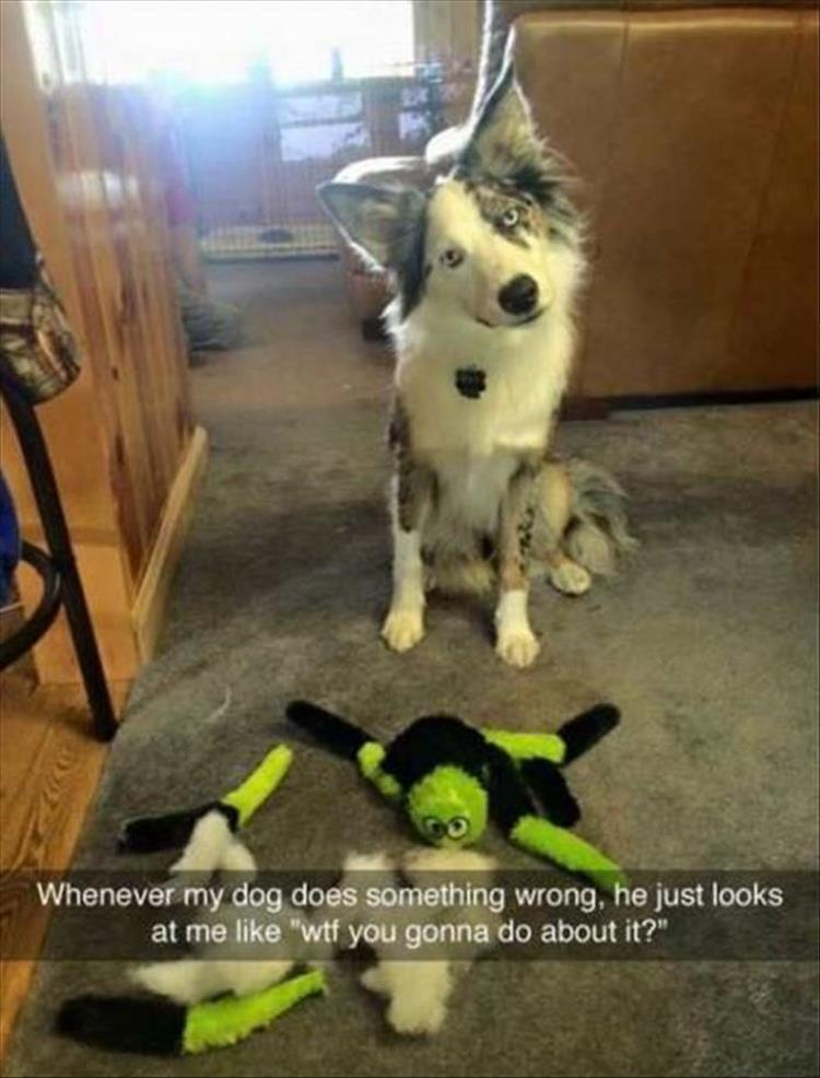 """Funny Animal Pictures Of The Day – 27 Pics #funnydoglaughter explore Pinterest""""&gt..."""