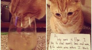 "Alcoholic cat #funnydogshaming ""> #funnydogshaming"