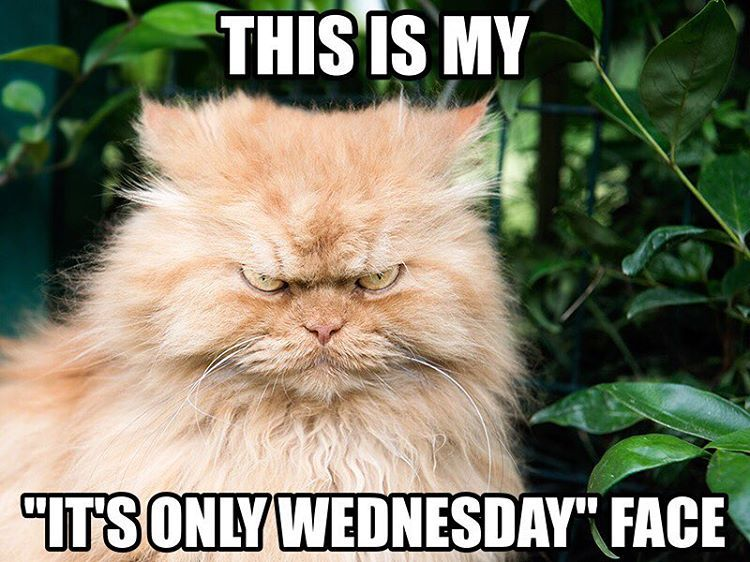 This is my, its only Wednesday face?! – via @instagram