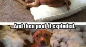 "Super Funny And Cute Animal Pictures #funnydogmeme ""> #funnydogmeme"