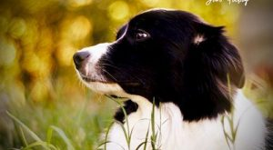 Your dog's opinion is the only opinion that matters #BorderCollie explore Pinterest&...