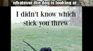 "Funniest Memes ft. Funny Dogs  "">"