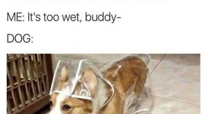 "Funny Dog Pictures With Captions #memes #humor ""> #memes #humor"