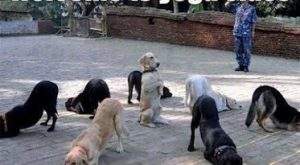 "Welcome To Yoga Class : DOGS – Also Known As ""Doga"" – Funny Animal…"