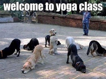 Welcome To Yoga Class DOGS Also Known As Doga Funny Animal Pictures With Captions Very Cats Cute Kitty Cat Wild Animals Dogs