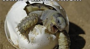 Animal Pictures With Captions  