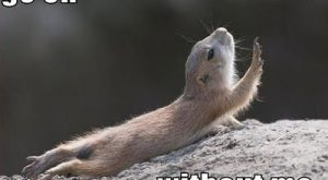 Funny Pictures With Captions : Funny Animal